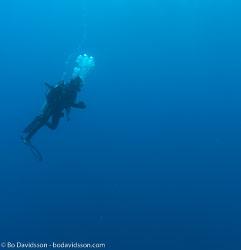 BD-090409-Marsa-Alam-4093133-Homo-sapiens.-Linnaeus.-1758-[Diver].jpg